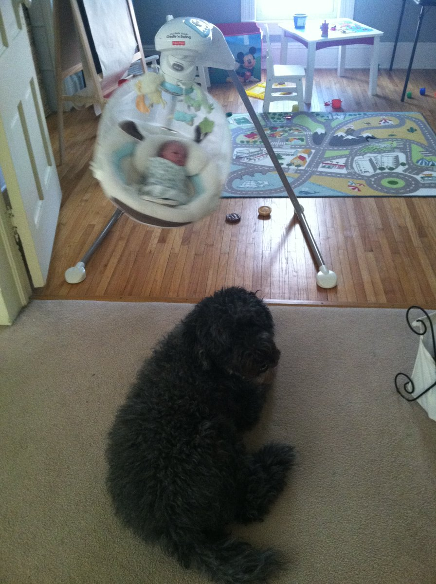 My dog watching over my youngest. #tbt 2/28/2014 https://t.co/zSQic17PBk