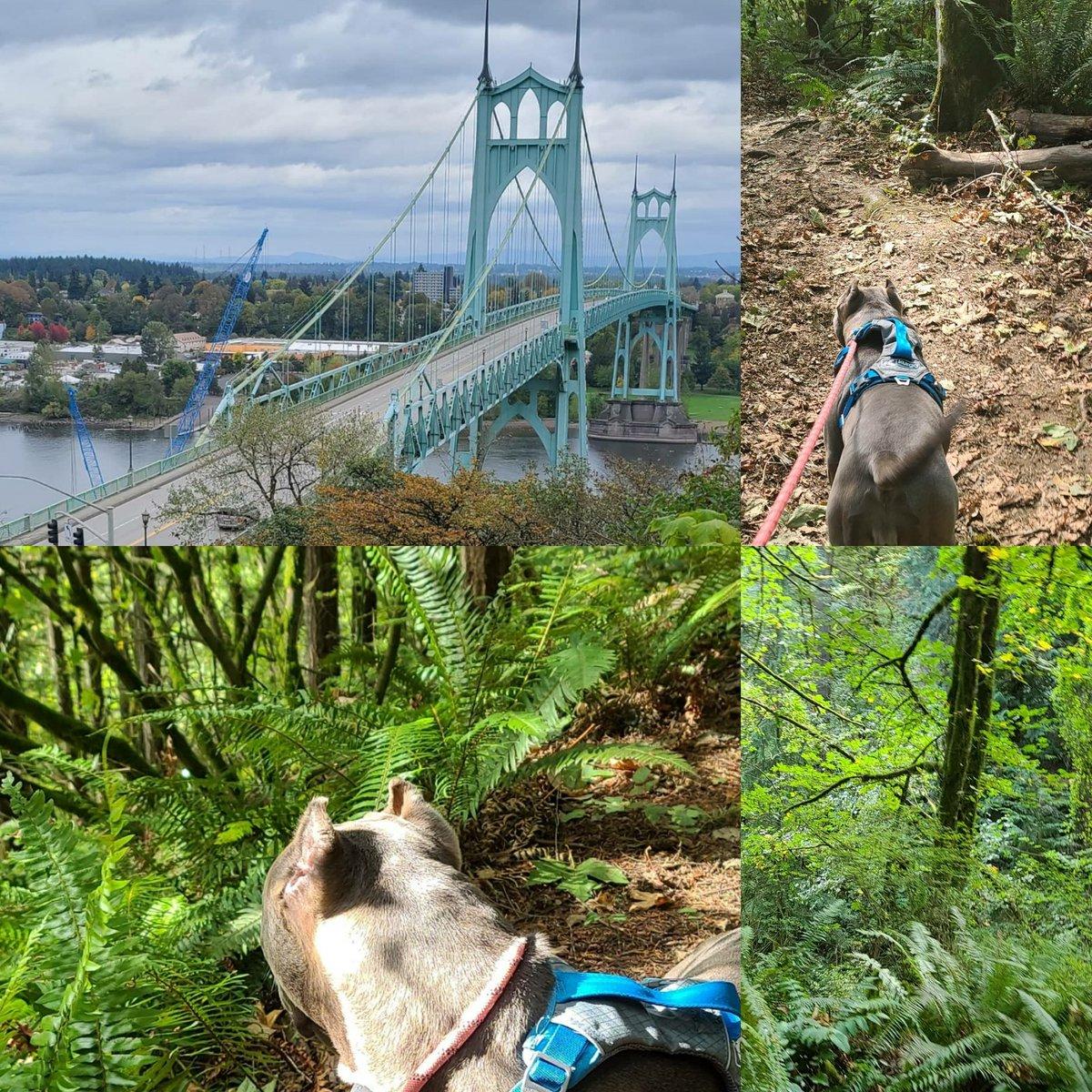 Fun adventure today. #forestpark #hikingadventures https://t.co/z3TylCxGns