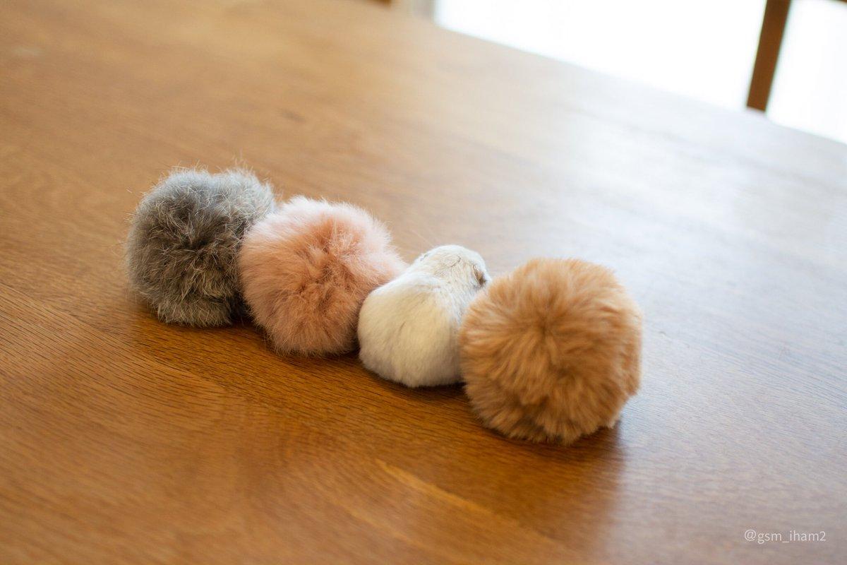 以前こうやっていろんな色の毛玉とハムを並べたことがあった。