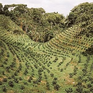 Coffee was brought to India by Indian pilgrims returning from Yemen in 1670 AD who  planted them in the Chandragiri hills of #Karnataka. Today India is world's 7th largest producer(348,000 mt tons).#Karnataka accounts for 75% of India's total production. @CoffeeboardI @APEDADOC