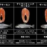 お買い物の参考になるかも!いまいち区別がつかなかった、鮭の種類の一覧表!