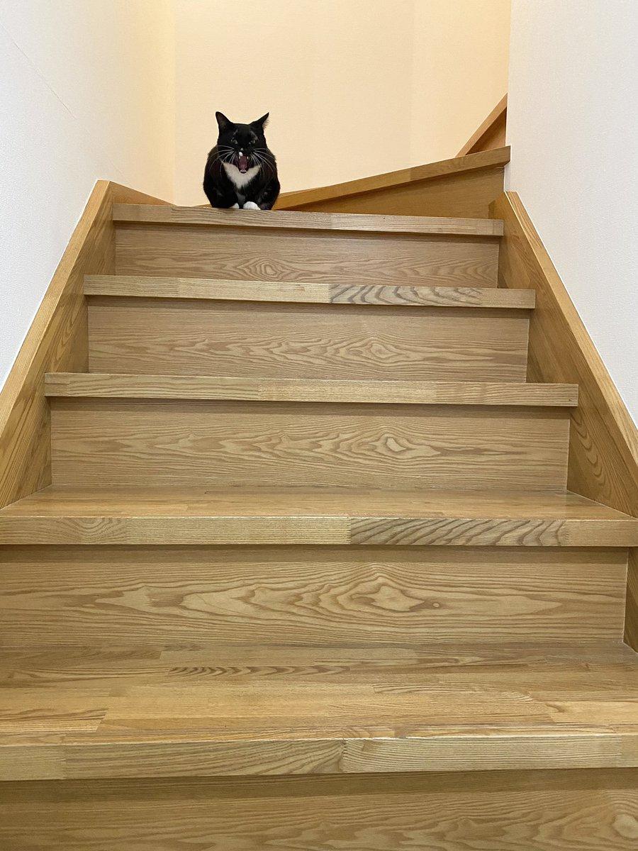 仕事を終えて帰宅すると階段の番人に「ここをだれの家だとおもっておるのだ!出ていけー!」と一喝されました私家主なんですけど…