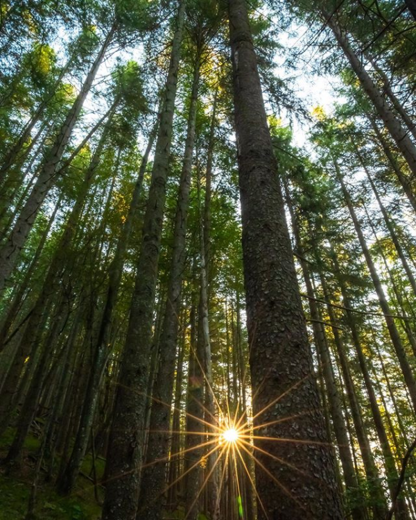 A new week begins with brightly green hope. Hope you have a day as nice, as chill as this photo. #greentrees #forests  Photo: Insta https://t.co/WWQTjnOkgG
