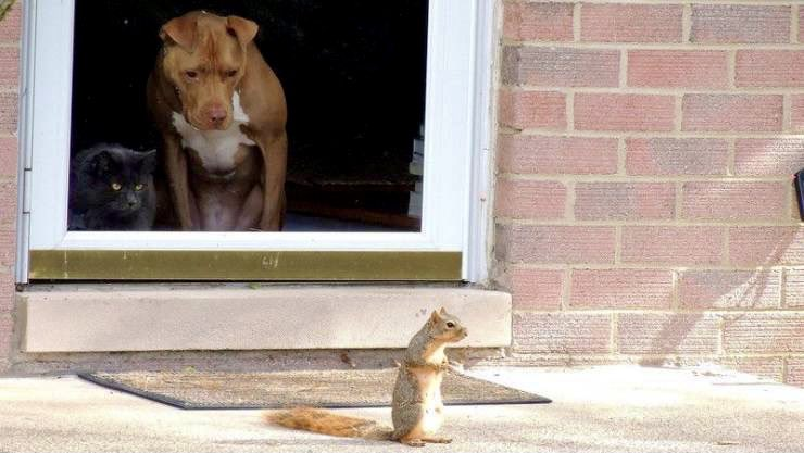"""""""Looks like he smells some nuts."""" """"Must be yours. Mine are at the vet's office."""""""