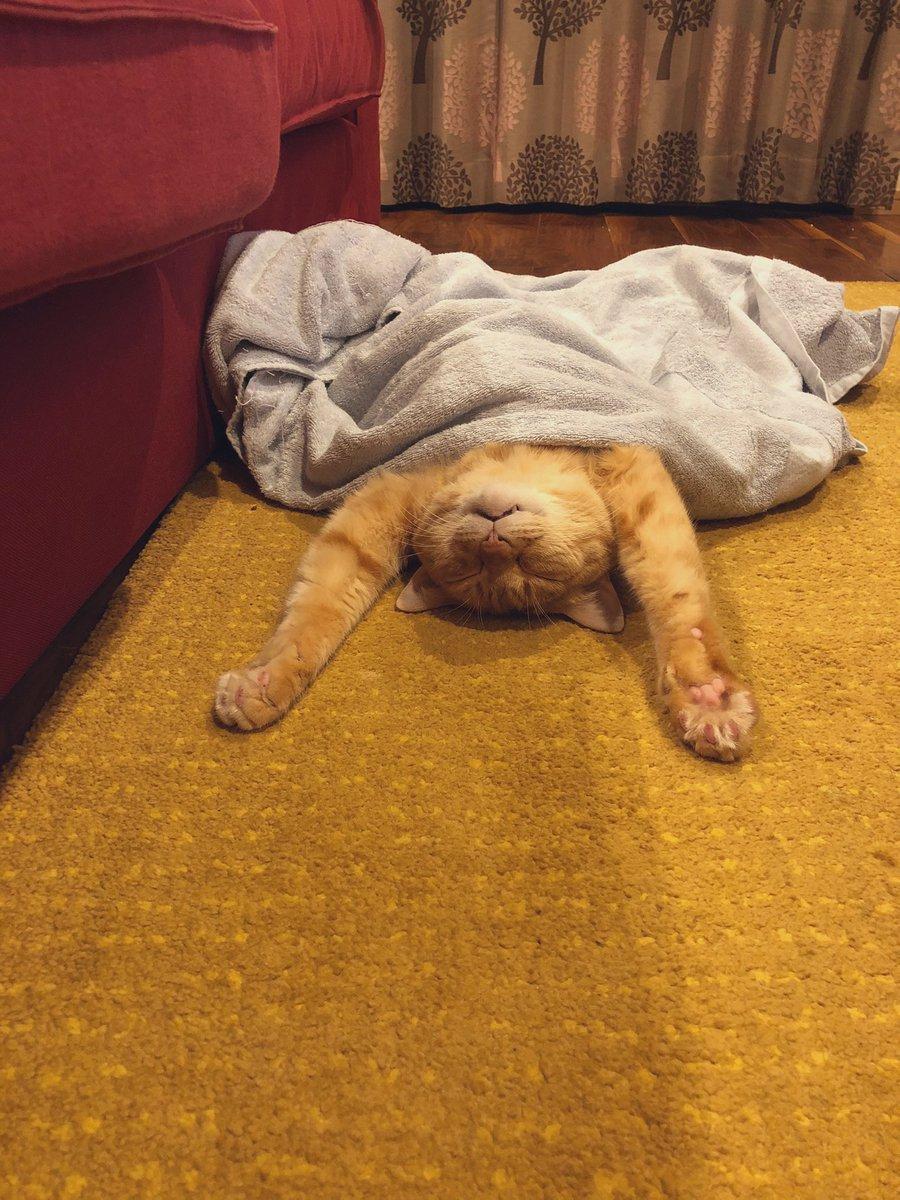 「猫をダメにする床暖房」