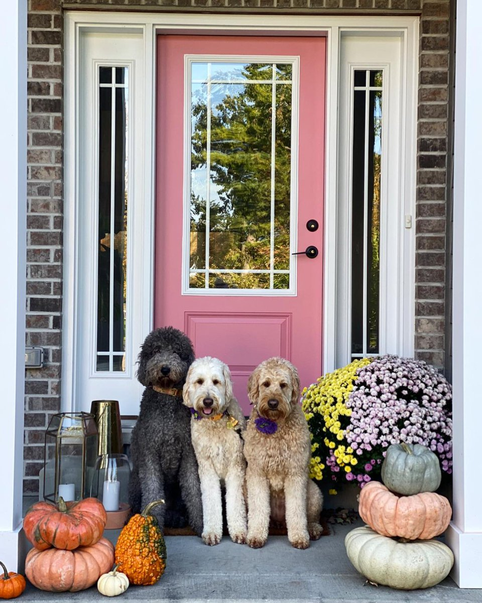 RT if pumpkins (& pups!) are your favorite porch décor. 🎃  (On Instagram:) 📸: @ olivelenadoodle 🎨: Memorable Rose SW 6311 📸: @ ourupstatehome 🎨: Tricorn Black SW 6258 #SWColorLove #fall #pumpkins #porch #diy #painting https://t.co/FqBhOJFZ3Q