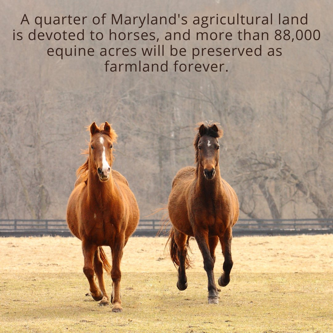 Did you know? The pastures where horses live, exercise and graze are among the best filters to protect the Chesapeake Bay. #MyMdFarmers #MarylandHorseMonth #ChesapeakeBay #ProtectTheChesapeake https://t.co/OdCtF5u1Ah