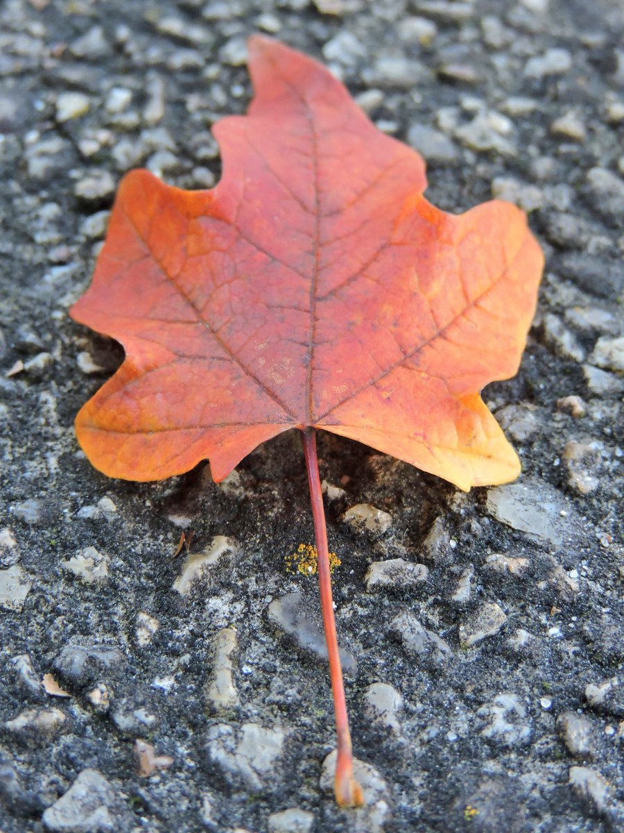 AUTUMN!🍁 Photo By: Joseph Hill🙂📸🍁    #Autumn🍁 #leaf #niceview #beautiful #awesome #Peaceful #Afternoon #daytime #autumnvibes #SouthernPinesNC #October https://t.co/86CXrg148G