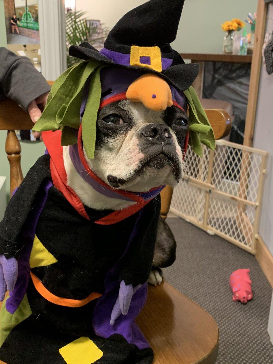 Gypsy and Eugene loved costume day, can you tell?  #PetsAreFamily #petsincostume #Halloween2020 #boo #dogsoftwitter #dogs #socute #cbdstore #CBD #libertymo #hemphavenliberty #animals https://t.co/4SPwobabGY