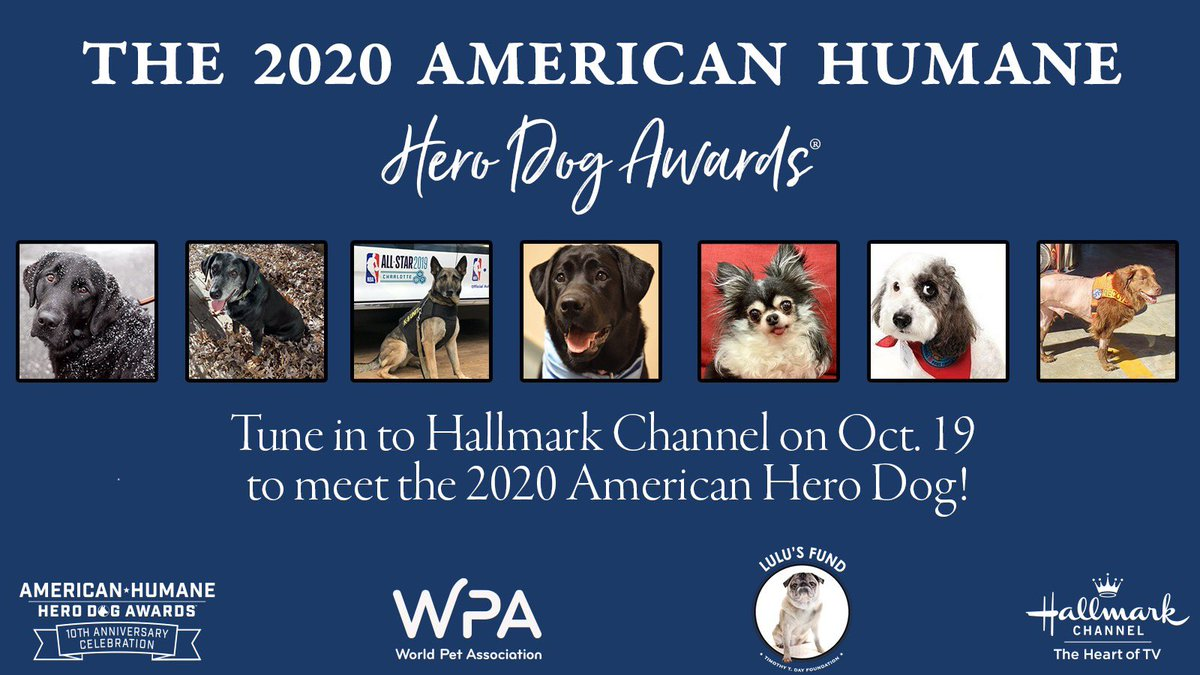 The @AmericanHumane @HeroDogAwards searches out America's Hero Dogs- often ordinary dogs who do extraordinary things. Tonight, one pup will receive the highest honor in all of the canine world - the American Hero Dog title. Tune in to @hallmarkchannel NOW to join the fun! https://t.co/YBJhrKdOrK