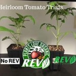 Image for the Tweet beginning: Adding Organic REV to heirloom