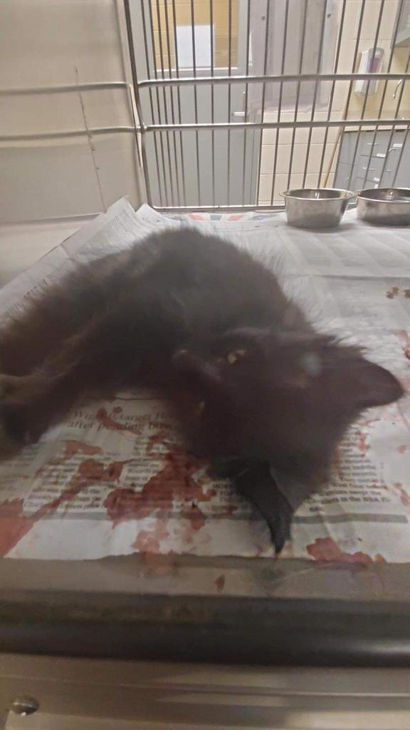 3 #kittens caught by a dumbwit #trapper & this baby has a part of tail #amputated. Scared & injured in WICHITA ANIMAL SHELTER, #Kansas. https://t.co/rzWOIqEtJ8 https://t.co/E0yOt9sI83