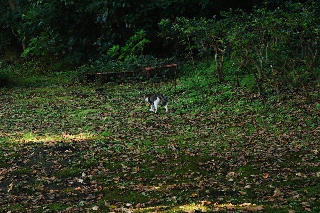 今日の森の案内人は猫でした お仕事へ向かおうと思います。 #写真 #森 #猫 https://t.co/tVjNOqtP6C