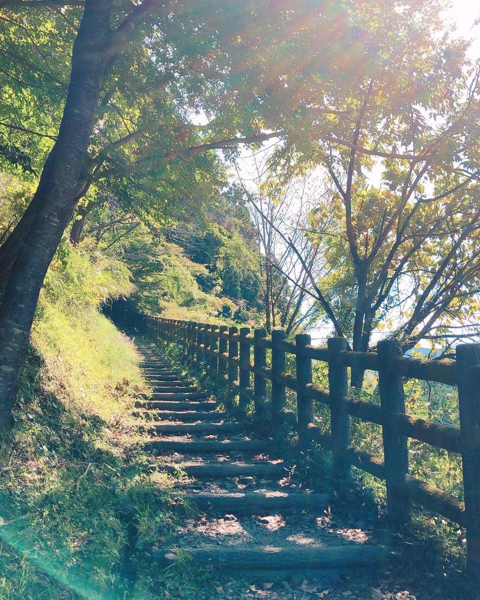休みの朝に牛馬童子から近露王子まで軽くハイキングへ行ってきた。 . #日本 #和歌山 #熊野古道 #中辺路 #ハイキング #休み #朝 #森 #自然 #japan #wakayama #kumanokodo #nakahechi #hiking #morning #forest #nature #japanlife #shiorilifeinjapan https://t.co/RzfNHKwxGY