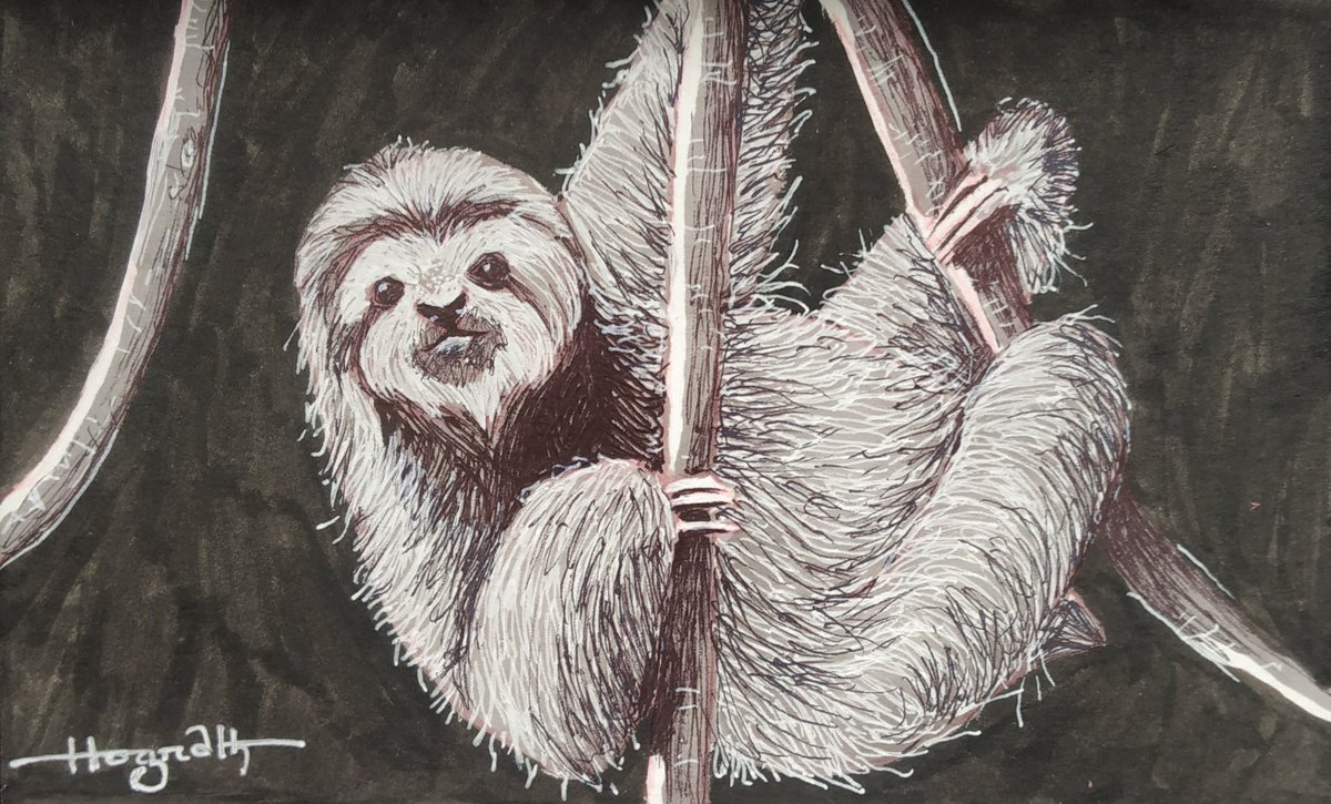 International Sloth Day  #art #artwork #artist #traditionalart #sloth #animalart #wildlife #wildlifeart #wildlifeartist #animallover #sketchbook #sketch #drawing #conceptart #illustration #saveanimals #rescueanimals #hograthart #artoftheday #savenature #dailyart #dailydrawing https://t.co/uRg62vvAig