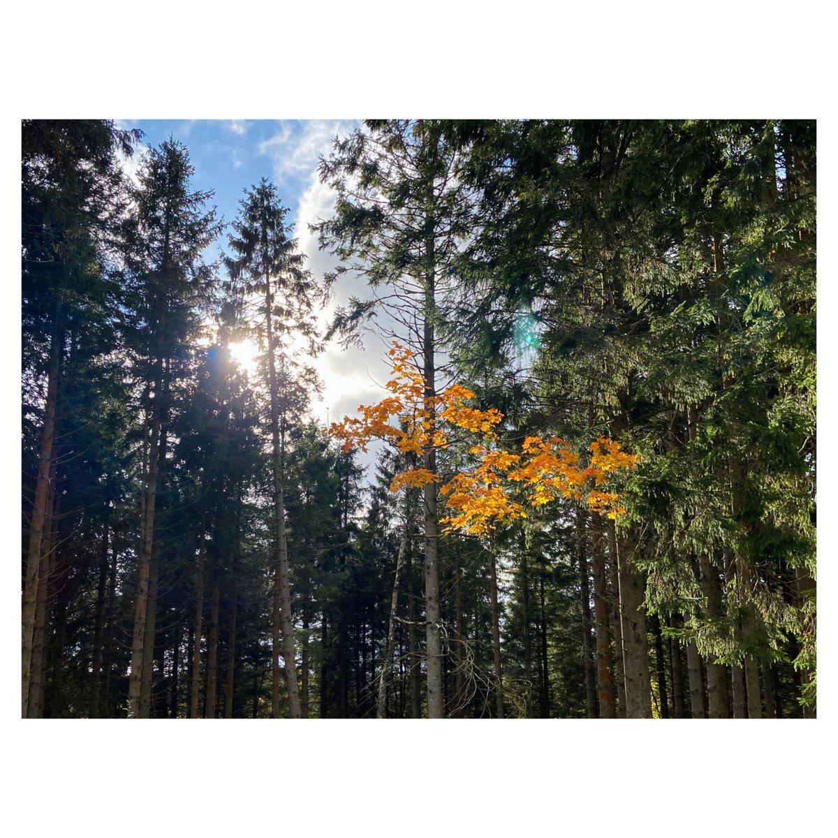 A subtle dash of autumn to start off your day 😊 #autumncolours @WoodlandTrust @NaturalEngland #FOTO #nature https://t.co/xWDxpMiSXQ