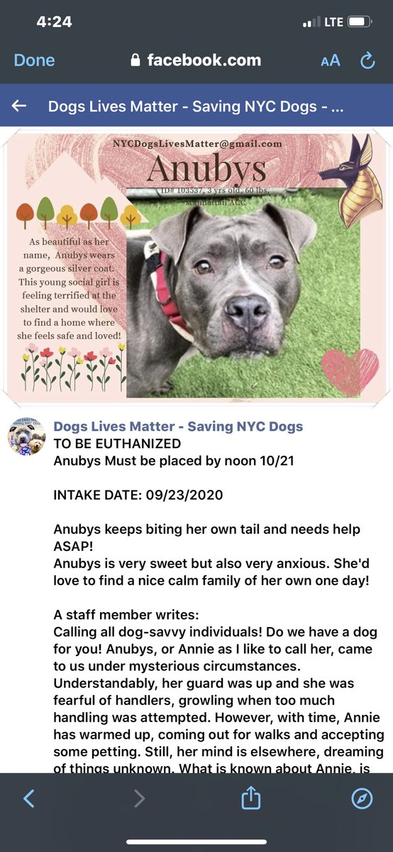 NYC lovely mixed breed stressed dog ANUBYS (aka Annie) needs #rescue / #foster / #adopt by 10/21 at NOON or will be euthanized.  https://t.co/xuOsG0vtDl https://t.co/8krbwO2F4s https://t.co/Jg67WLt0y4