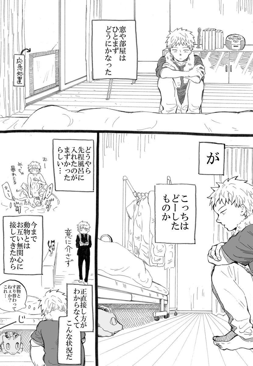 【創作漫画】窓破壊したトカゲがベッドから出てきてくれない【再掲】