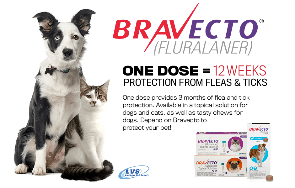 Bravecto delivers flea & tick protection for dogs & cats up to 3 times longer than other leading preventives! That's 12 weeks! Bravecto begins killing fleas and ticks within 2 hours. Research here --> https://t.co/rM59kjSeME https://t.co/L1Gv7jsXgw
