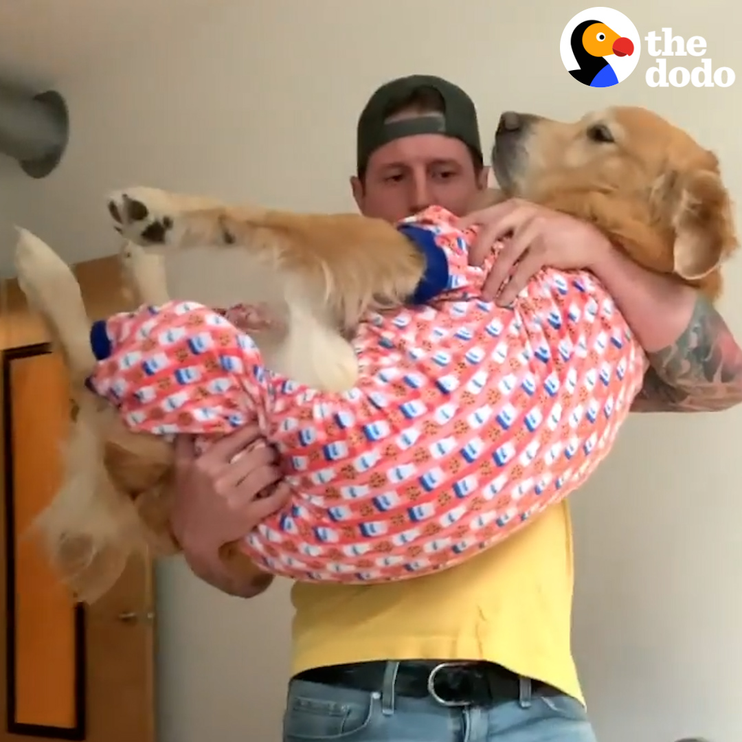 Dog jumps into dad's arms every night when he gets home — and then they have together time 💛