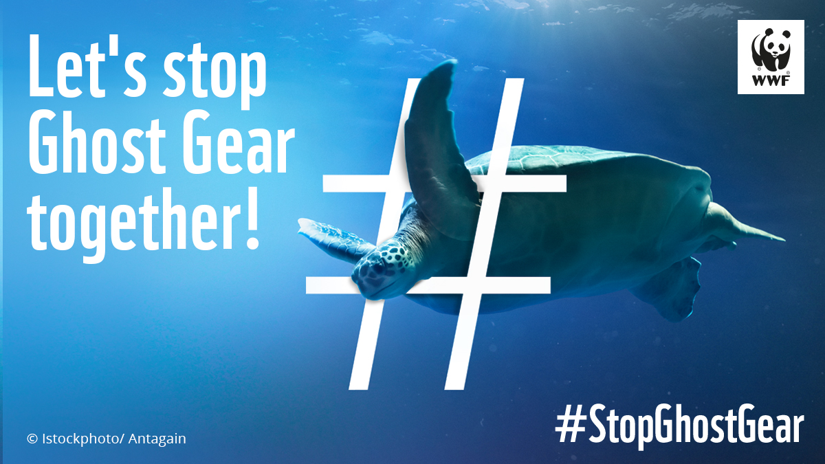 #BREAKING Abandoned fishing #gear is the deadliest form of #plastic debris for marine life. A million tonnes of fishing gear is lost in the sea every year. Read #WWF study & join the call for a Global #Plastic Treaty to #StopGhostGear  https://t.co/02iahlAfct https://t.co/CW2r7dPCbj