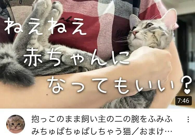 . YouTubeを更新しました。  Updated YouTube.  https://t.co/tYxYyWehWk  #保護猫  #子猫 #kitten  #cat #猫のいる暮らし  #ねこすたぐらむ  #にゃんすたぐらむ  #catstagram  #うずらねこ  #youtube https://t.co/5seD1SDdO2 https://t.co/ROMBQqLmNH