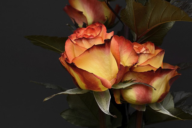 Roses are marvelous. No two are the exact same. The petals are so silky soft, yet the thorns can really hurt with a prick.  All things have some beauty and also some darkness. Nothing and no one is perfect, but everyone has some marvelousness about them.  #roses #beauty #mindset https://t.co/4wI9rd3oX9