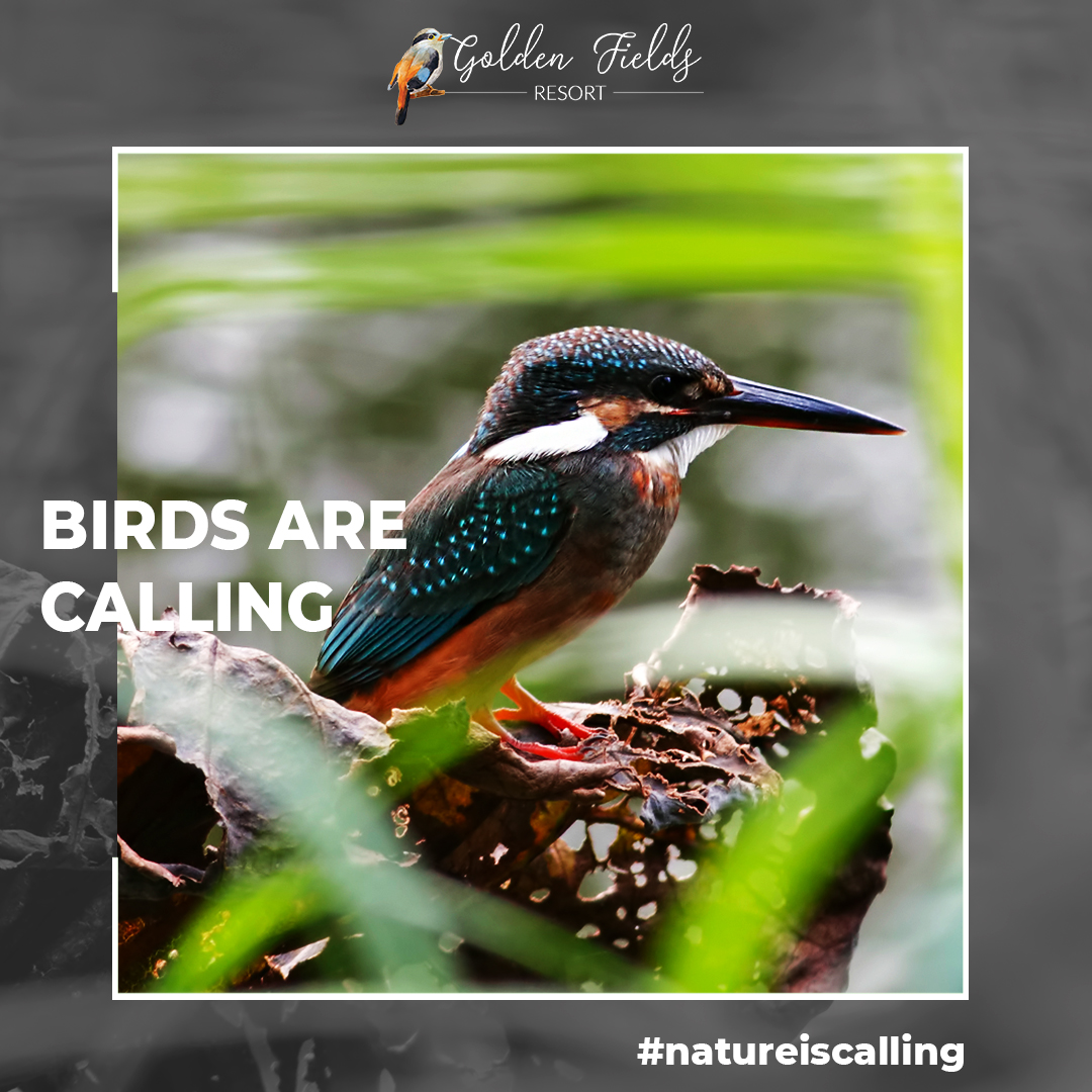 Call of birds, mesmerizing flowers, captivating river, all awaits you at Golden Fields Resort. #mulshi #pune #resort https://t.co/Yggh6sYikL
