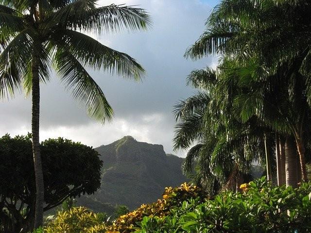 Photo By mdkidder | Pixabay - via @Crowdfire    #palmtrees #palms #hawaii #kawaii #hawaii #paradise #palmeiras #hawaiian https://t.co/QqgYU75r15