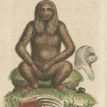 Image for the Tweet beginning: Happy #InternationalSlothDay! This sloth seems