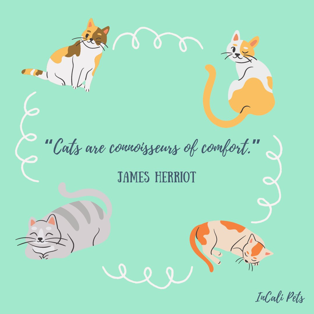 Cats are really our source of comfort 😍😸  Send this to other cat lovers out there! 💬😻  🙀❗ Make sure to join our official launch page (https://t.co/OacGeEtUga) for exclusive giveaways and discounts!  #InCaliPets #InCaliCats  #pets #cats #petproducts #petsupplies #catlovers https://t.co/EScigz5Ath