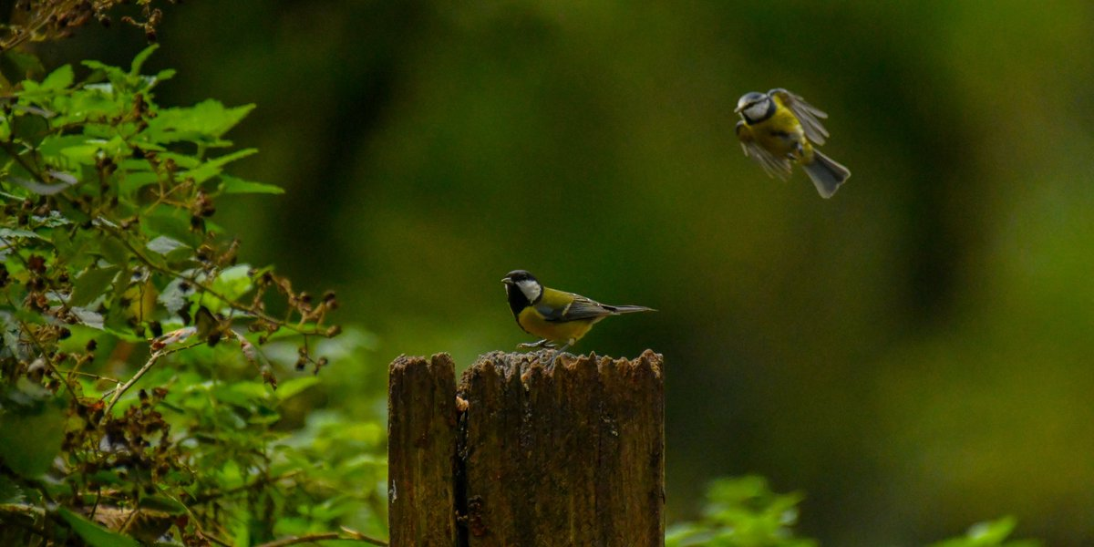@wildcardiffhour incoming!! @forestfarmuk @BBCSpringwatch #BBCWildlifePOTD @Natures_Voice @RSPBCymru #TwitterNatureCommunity #30daysWild #nature #photohour https://t.co/dwzqtHDDLQ