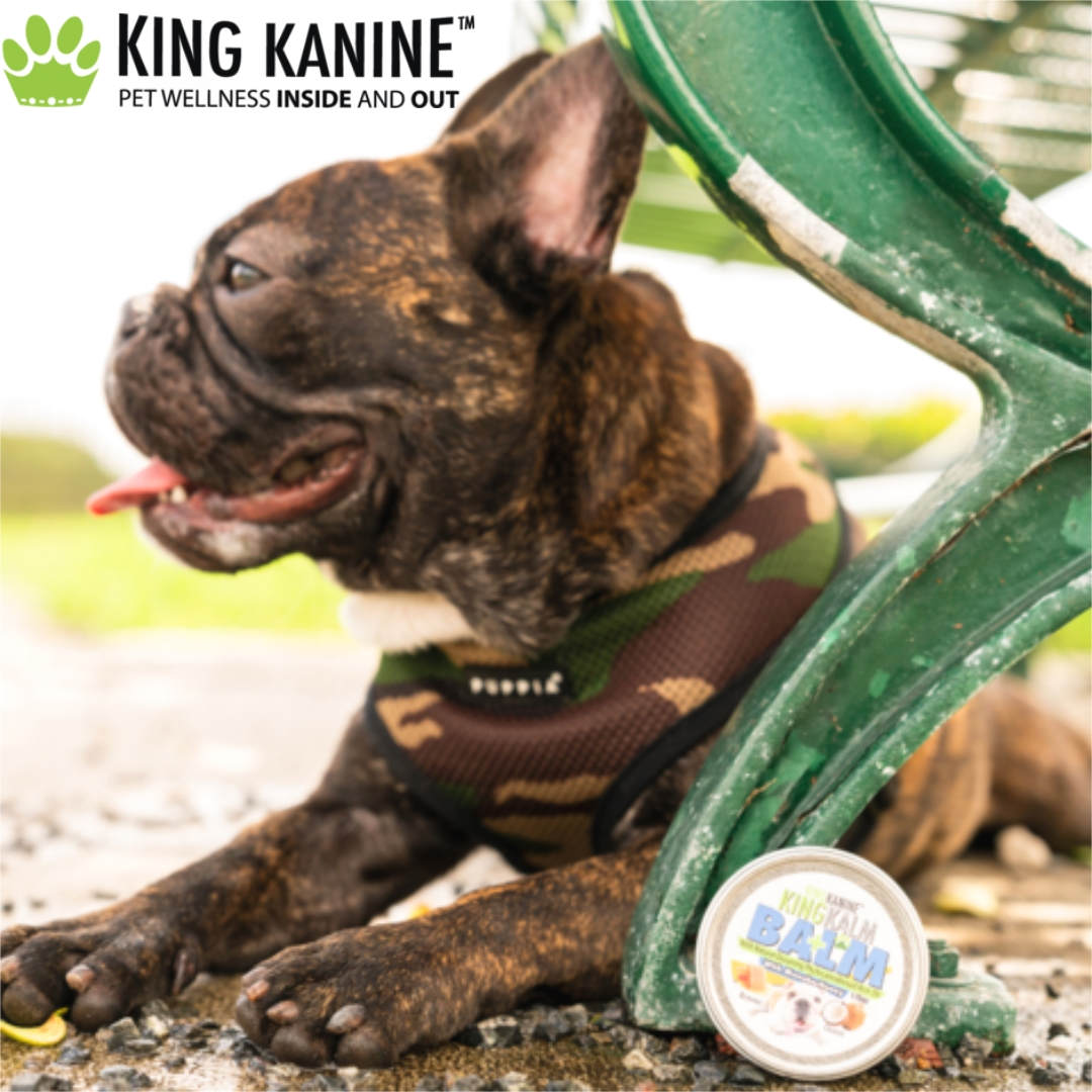 Organic CBD products for pets available, bringing joy to families nationwide as we help them keep their four-legged members healthy and happy. King Kanine helps raise funds and awareness for the ASPCA #community #Pethealth #CBD  >>  https://t.co/FRJ90K9Esc https://t.co/L158KnRj0i