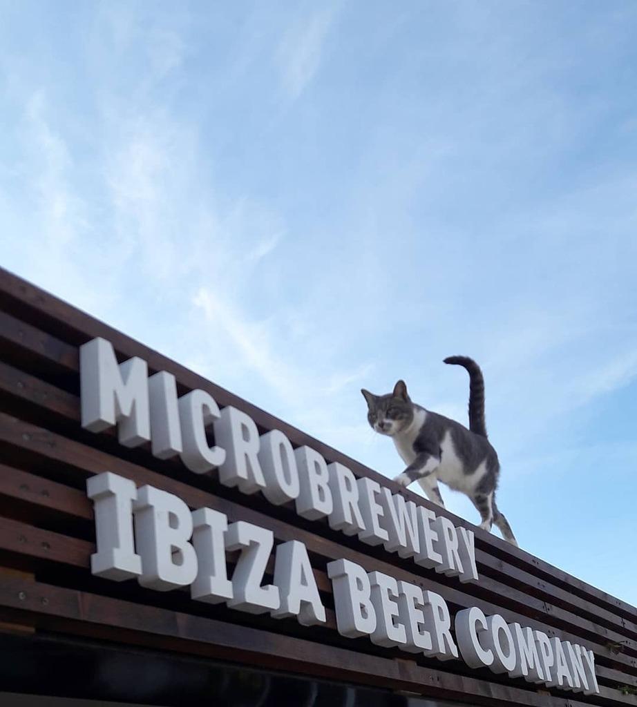 Good cats drink good beer 🍻😸 . . . . . #ibosim #welovecraftbeer #ibizabeercompany #discoveribiza #portdestorrent #instacats #catsagram #goodbeer #goodbeerhunting #cervezaartesana #cerveza #ibizabeer #cervezaibiza #microbrewery #ibiza #km0 #catlovers … https://t.co/Te3jgAEPUe https://t.co/W5vYcq3k2E