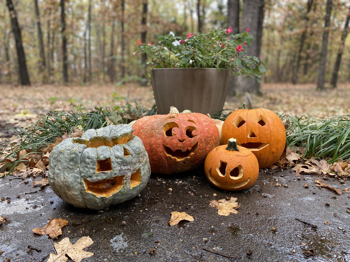 Poppy: which Jack O Lantern is yours? My 4 year old: the orange one.  #Children #momofboys #parenting https://t.co/4QjWomZwaG