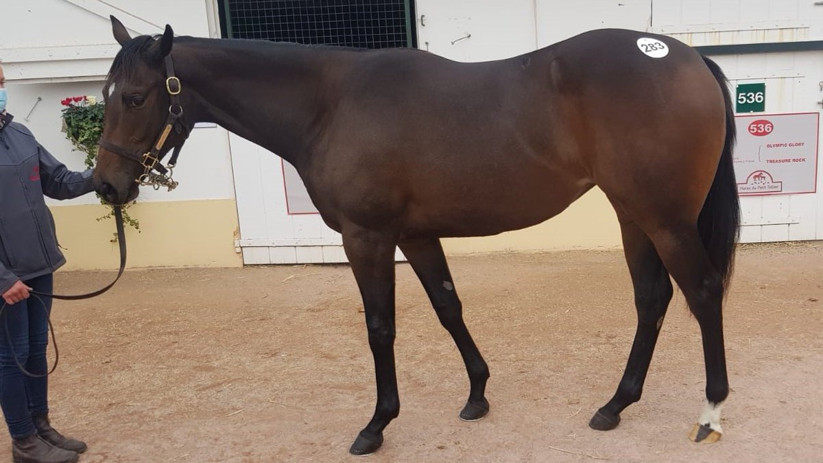 New Horse Alert!!  We are delighted to offer shares in Lot 283 bought today @InfoArqana October Yearling Sale.  The daughter of OLYMPIC GLORY will go into training with @RichardFahey.  Further details▶️https://t.co/1727mEFmfL