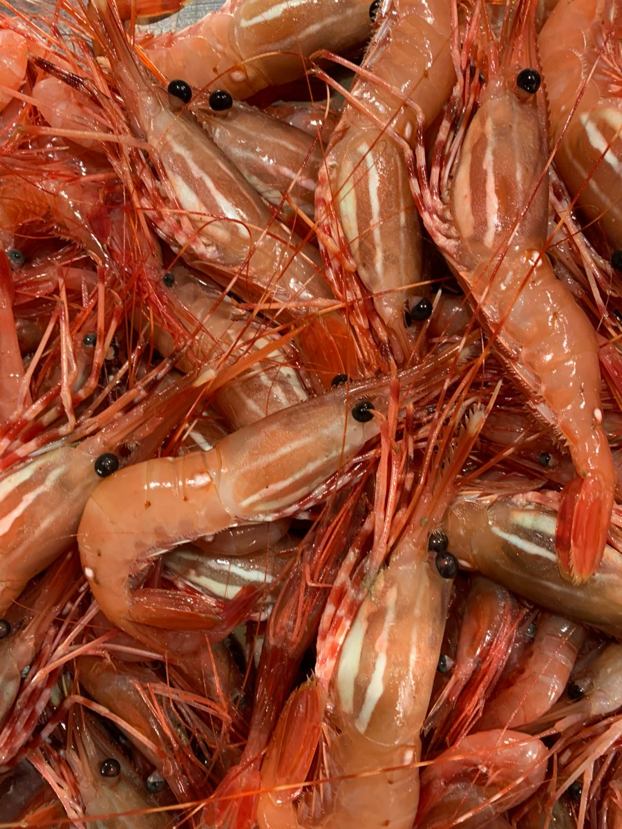 How lucky are we to have such abundant, well managed, spot prawn fisheries in BC?  #buybc #bcseafood #oceanwise #fisheries #spotprawns https://t.co/dO0sz0aGjo