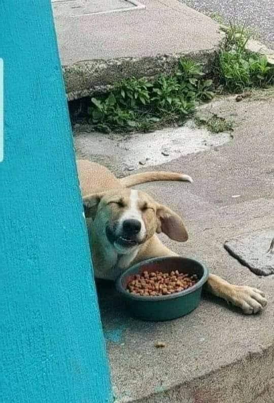 Seja gentil com os doguinhos da rua ❤️ https://t.co/FVfnXcgR0e