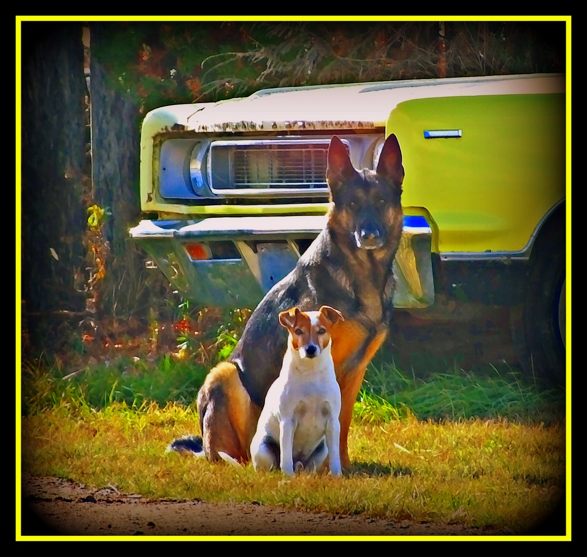 """Frankie Wanted a Portrait"" - Watercolor - along the Dawson Trail in La Coulee, Manitoba #doggos #dogs #DawsonTrail #DawsonRoad #LaCoulee #SteAnneRM #Manitoba #Southeast #Eastman #Fall2020 #Autumn2020  #October2020 #Watercolor #watercolorart #photoart #car #Rambler #Rebel #retro https://t.co/SrcllCVGtA"