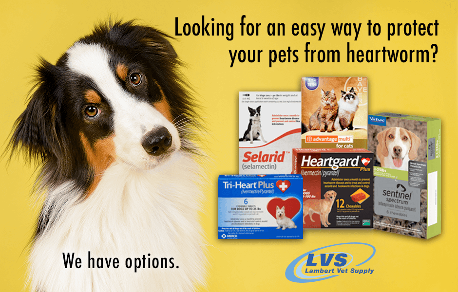 Heartworm Disease is a nightmare for cats & dogs. Keep them safe with heartworm preventives. Shop our huge selection of competitively-priced heartworm meds & save! Find out more here —> https://t.co/HGe8JYhbVZ Heartworm medication always ships free! https://t.co/k9I6LtGatu