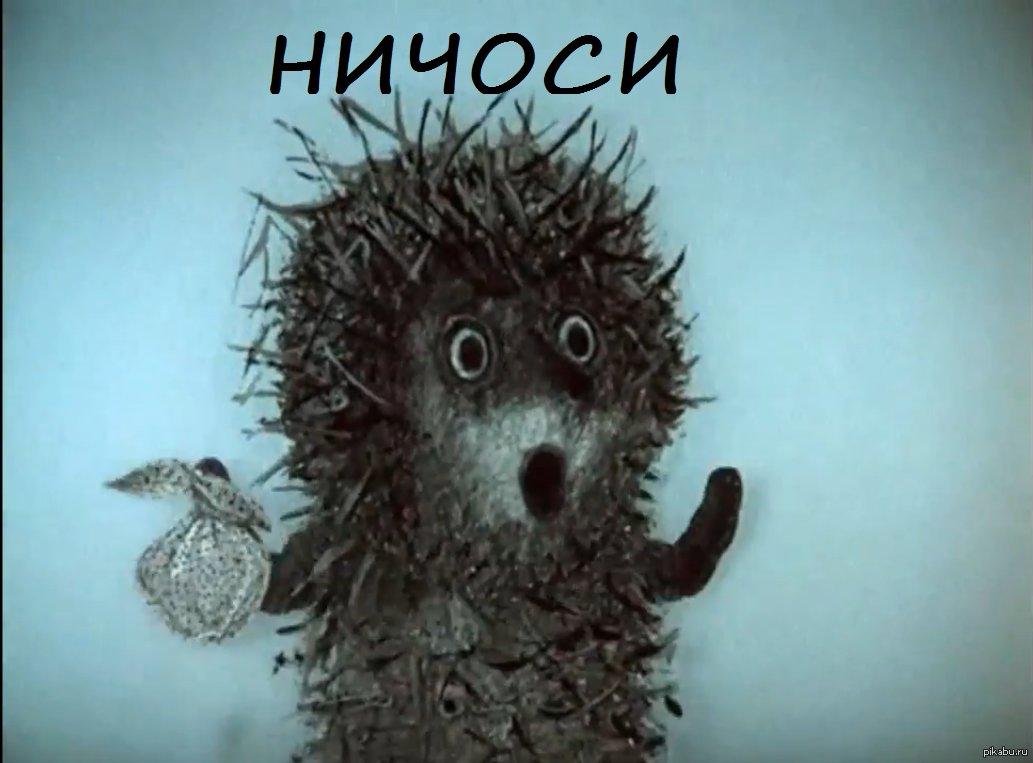 """veronika smolkova على تويتر: """"Бедный ежик!! Даже лошадка от него  спряталась!!))… """""""