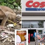 Image for the Tweet beginning: No more monkey business! Costco