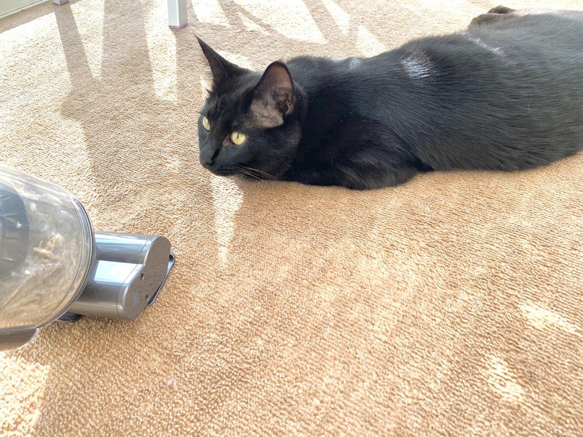 掃除機へっちゃら猫ひとえさん