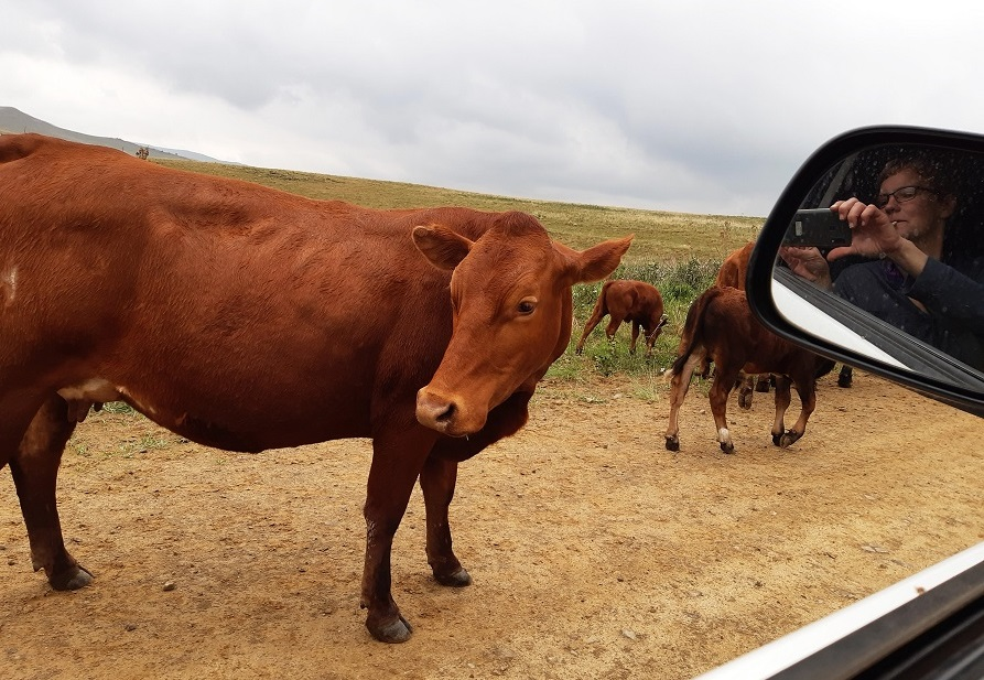 If you visit the beautiful Southern Drakensberg, make sure to take it slow, greet the cows and horses, sip the coffee, walk the trails. #drakensberg #underberg #hike @SouthernDrak @DBChoir @BergHikes @TourismKZN @ShotLeft https://t.co/enh7N3Dq5n
