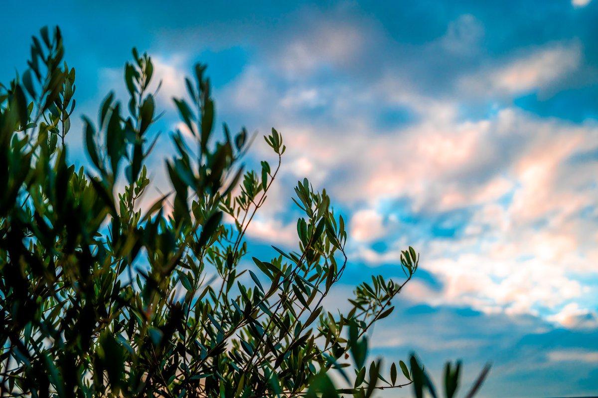 雨上がりの夕暮れ  #空がある風景    #カメラ好きな人と繋がりたい #写真好きな人と繋がりたい #ファインダー越しの私の世界 #写真撮ってる人と繋がりたい https://t.co/sQfdGQTQiT