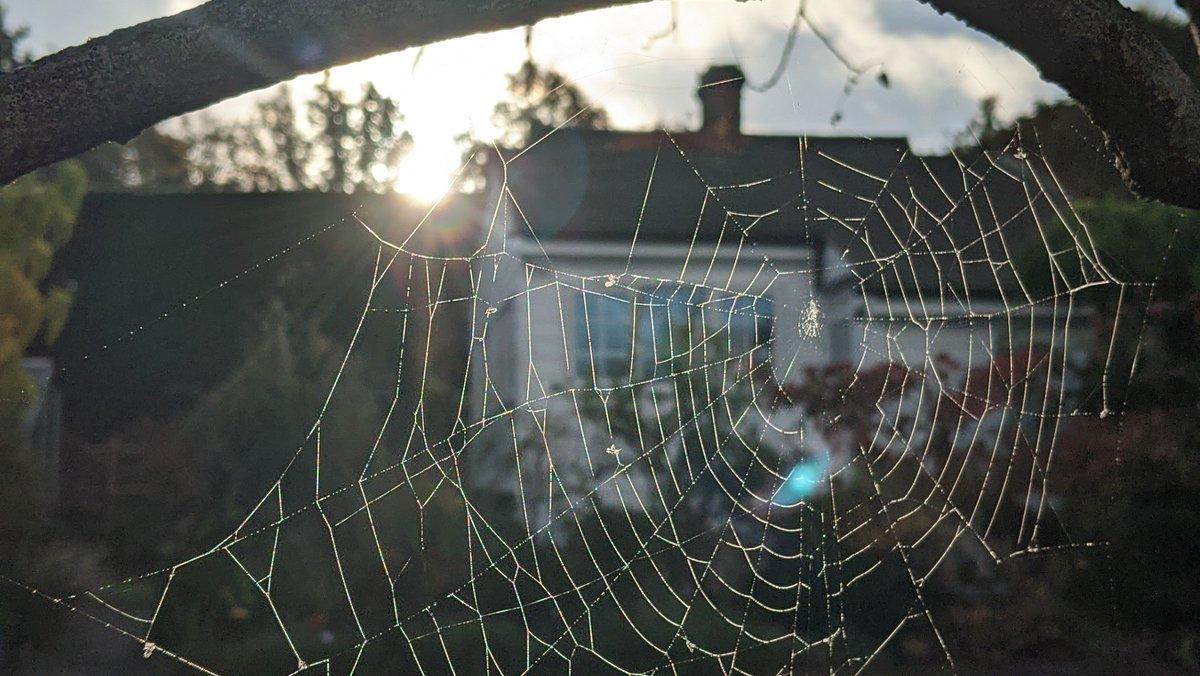 Couldn't resist this view of my studio this morning . #studioatthetopofthegarden #studiotime #cobweb #spidersweb #garden #studioview #studiolife #studioviews_daily #studioviewoftheday #studioviewsdaily #studioviews #studio #spider https://t.co/ZtKkMIEILg