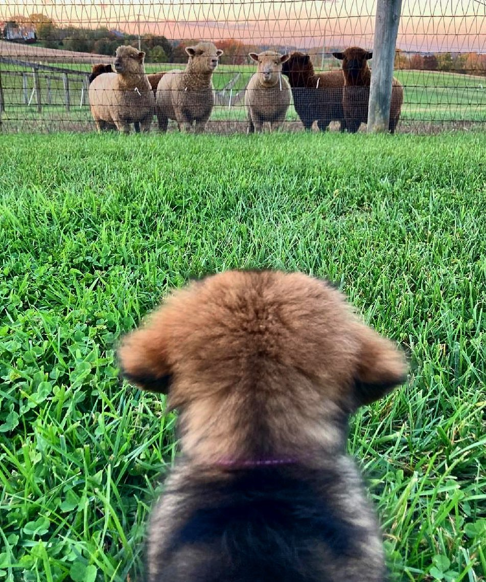 Making new friends at The Farm (open for a surprise!)🐾❤️ #FarmFriday https://t.co/rnRvMG89nu