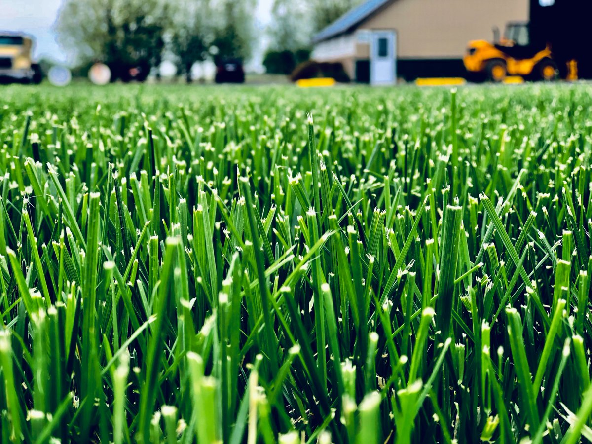 """If you're in Central Illinois, Ideal Turf is your one-stop resource in keeping your lawn the best it can be.  """"Best sod on the planet. Just drive out to their turf farm and walk in the grass. You'll be amazed.""""   -Review by Carlie  https://t.co/tEOujOv89I #FarmFriday https://t.co/YIZshw9J27"""