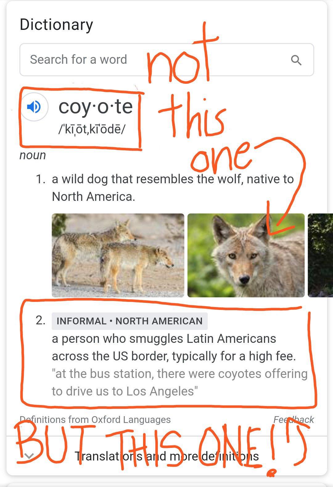 coyote, TeamKJ, Kevin Jackson