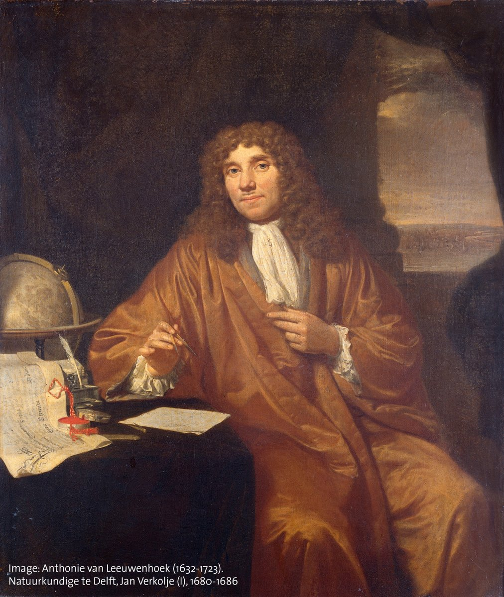 "Happy birthday to Antonie van Leeuwenhoek, the largely self-taught ""Father of Microbiology,"" who was born #OTD in 1632. He was the first to document observations of microscopic organisms, including bacteria, protists, & rotifers, which he called ""animalcules.""🦠🔬🦠"